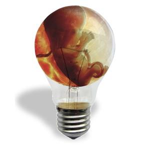 Ideas_Baby_Bulb